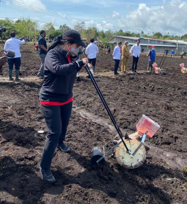 Ketua DPR RI Dr.(H.C) Puan Maharani : Tanam dan Jajan Jagung Bareng Jokowi di Sorong Papua